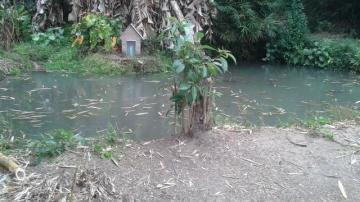 Comprar Rural / Chácara em São José dos Campos R$ 850.000,00 - Foto 9